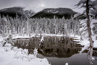 Snow Forest Reflection